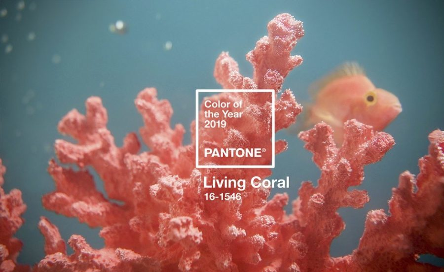 diseño web tendencias 2019 pantone color of the year living coral